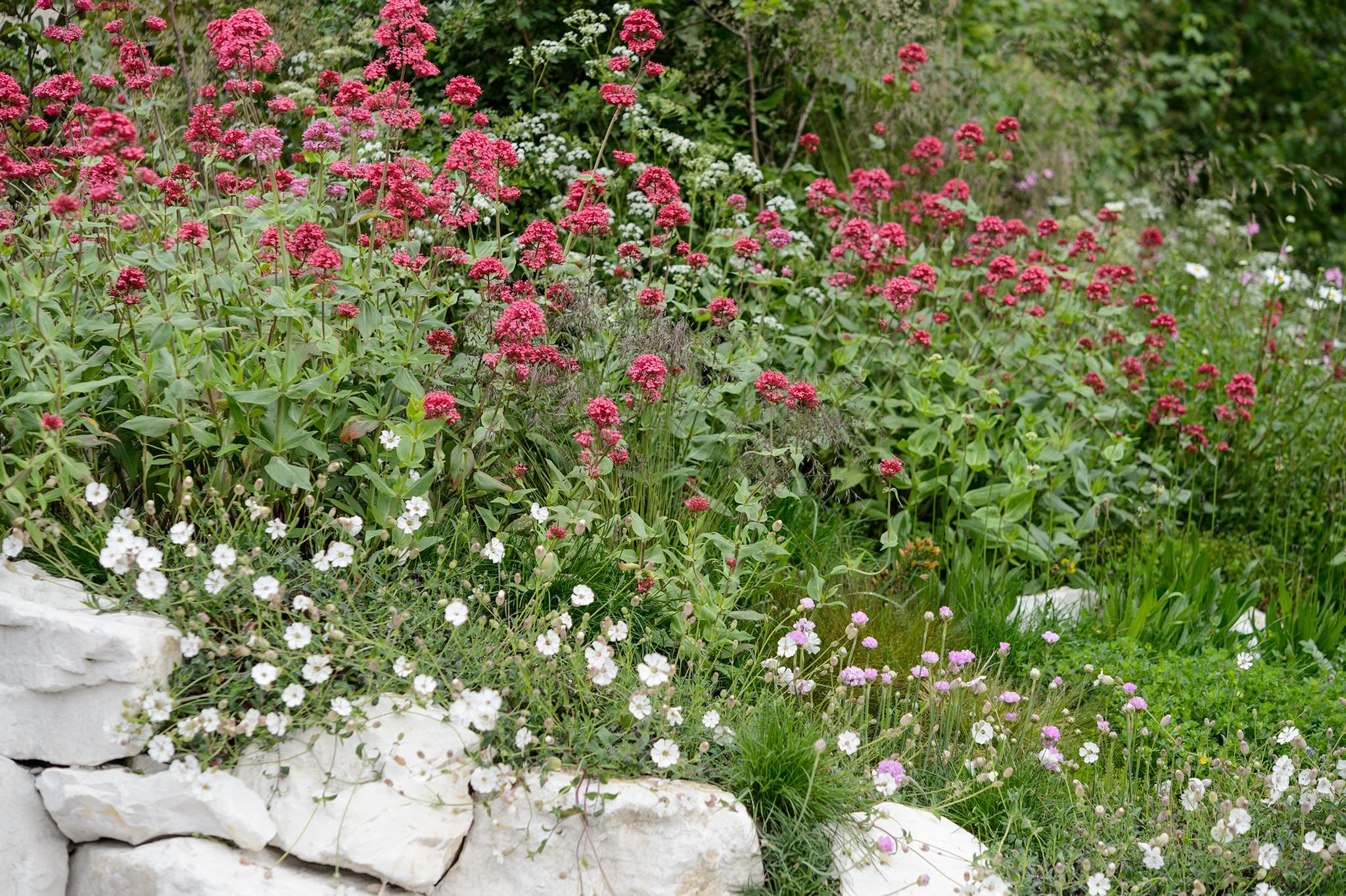Plants for a coastal garden