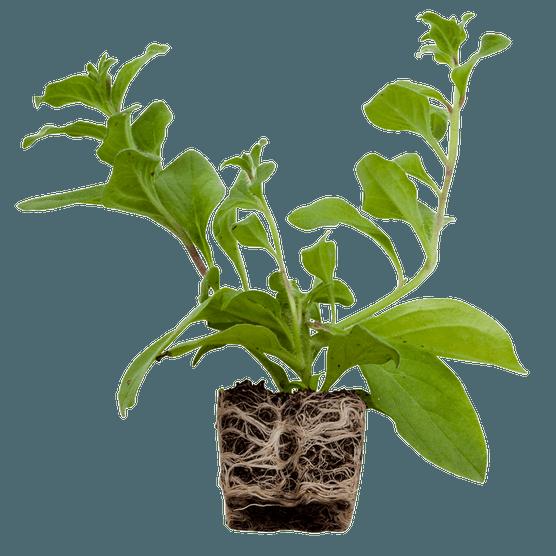 Plug plant cut out