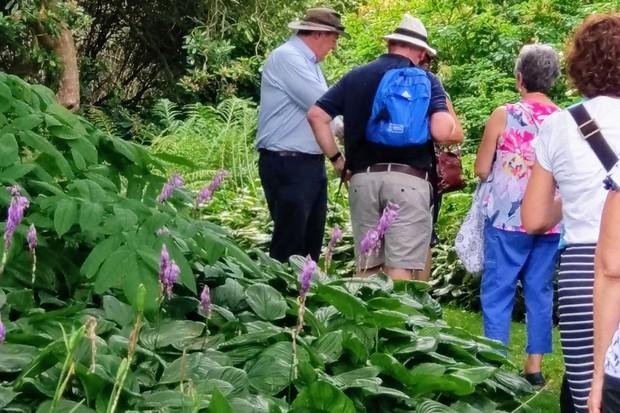 john-anderson-savill-garden-tour-_2