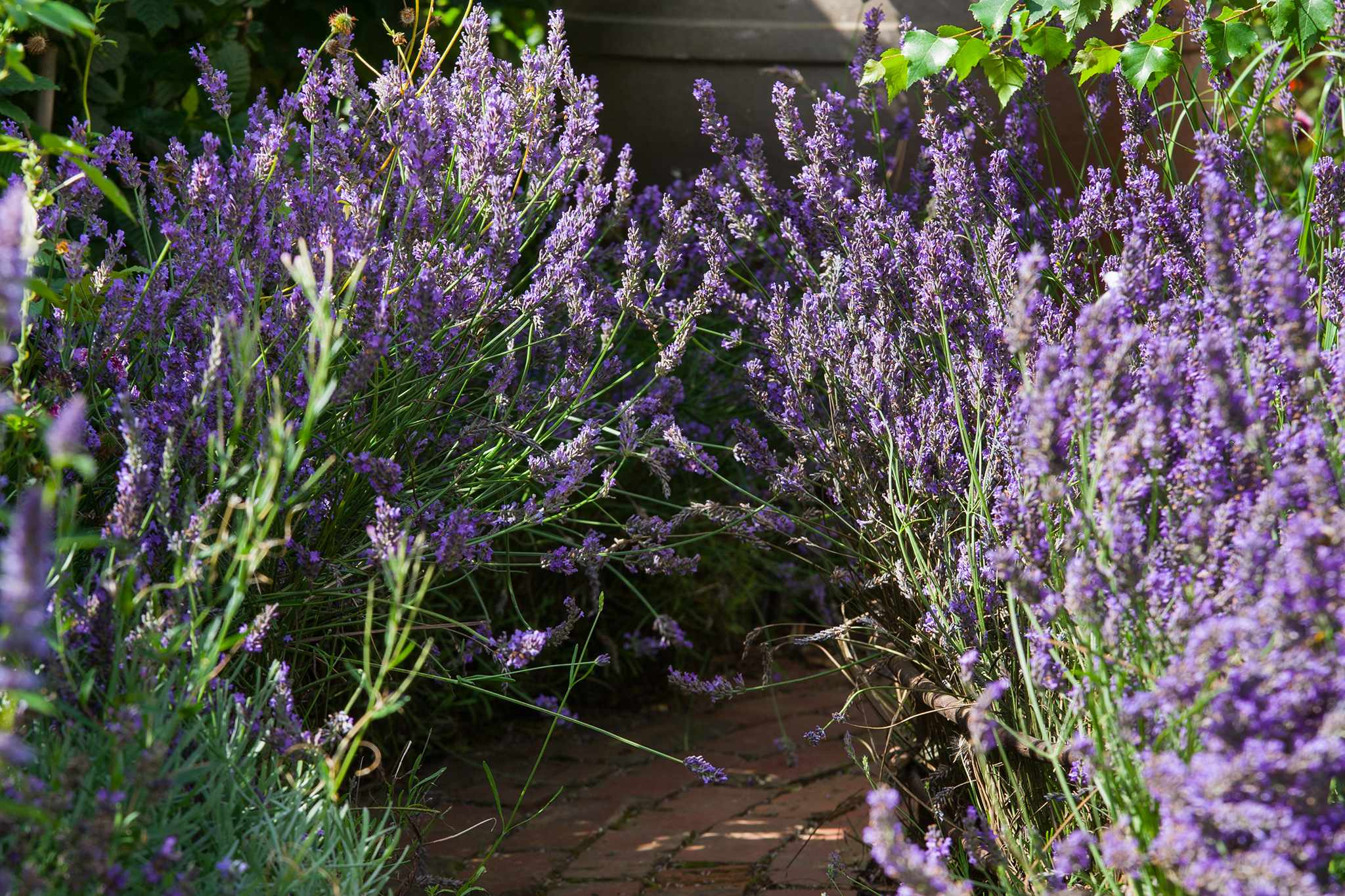 Best plants for an informal hedge