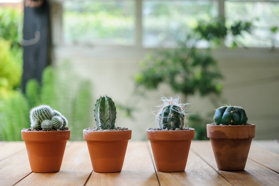 Growing House Plants Bbc Gardeners World Magazine,New York Times Travel Ban To Europe