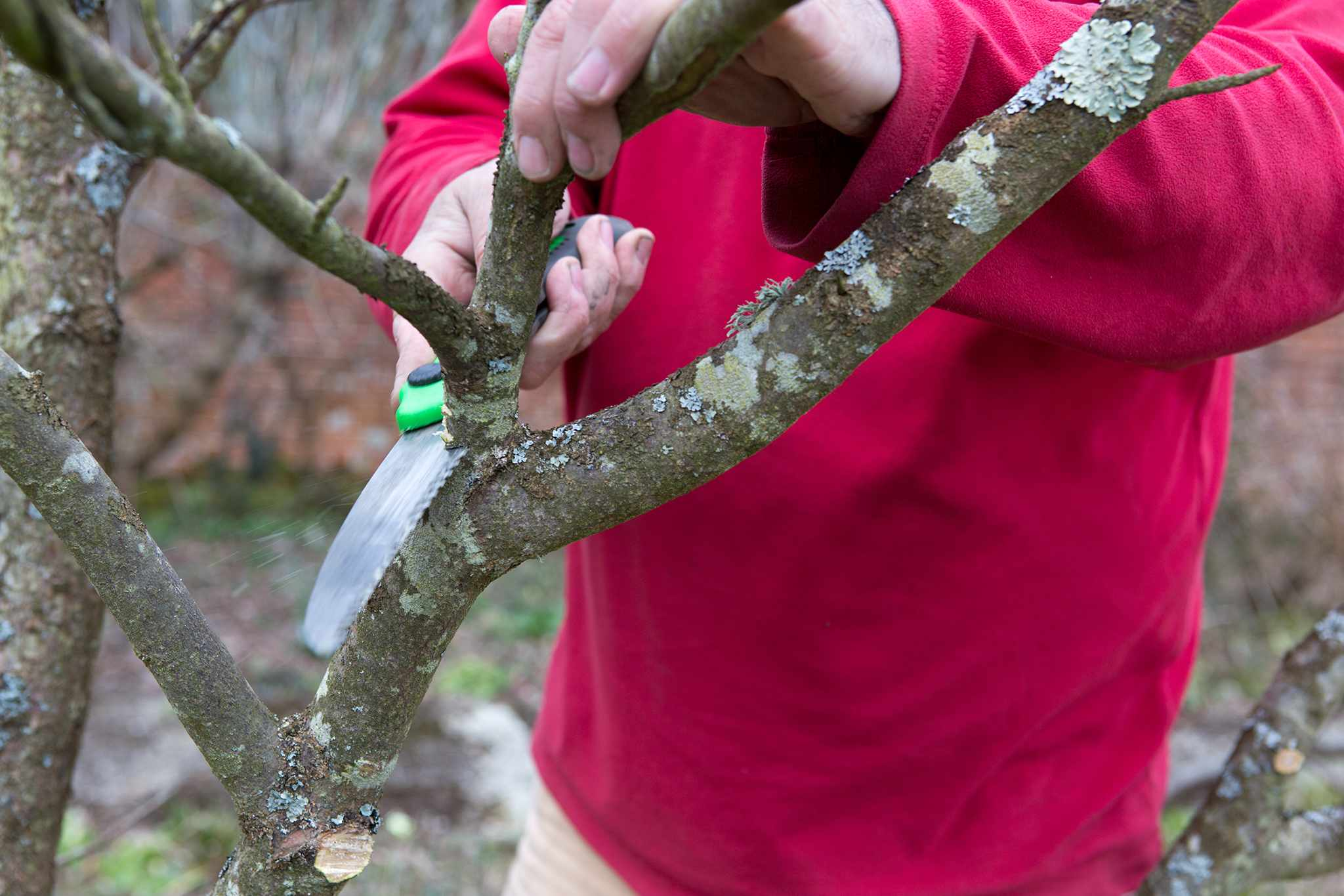 Using a pruning saw on thicker branches