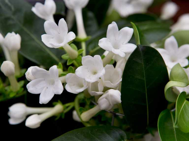 Six scented houseplants