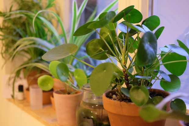 Growing houseplants – must-have houseplants