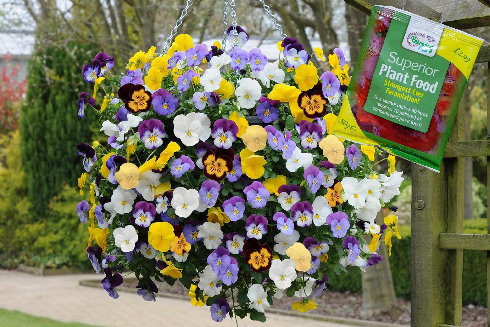 blooming-direct-buy-12-get-12-free-2048-1365