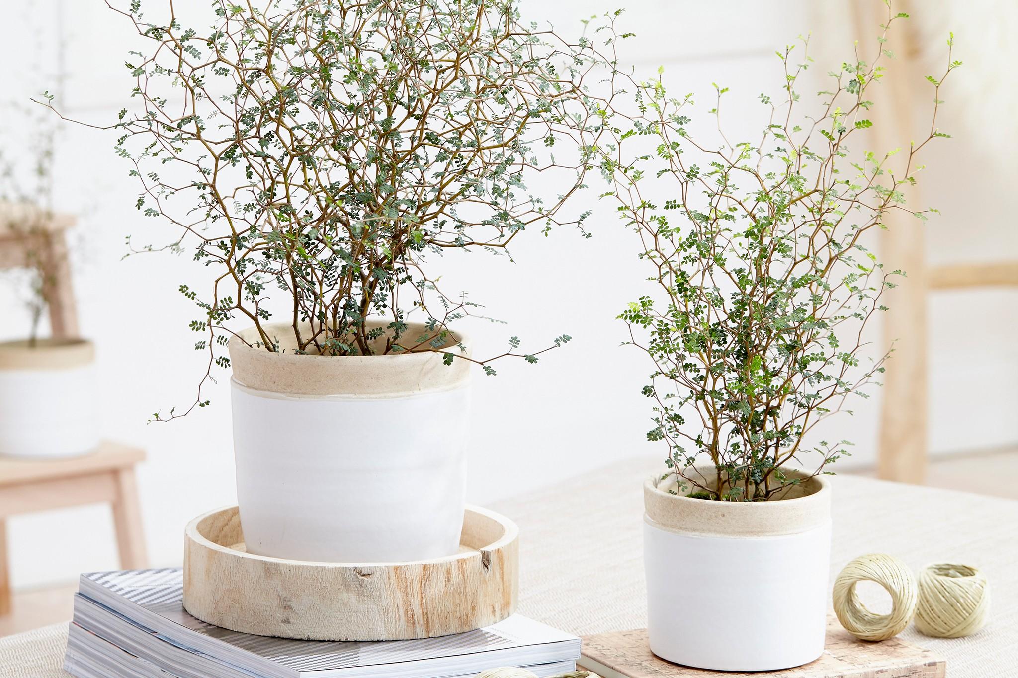 hayloft-sophora-little-baby-half-price-2048-1365