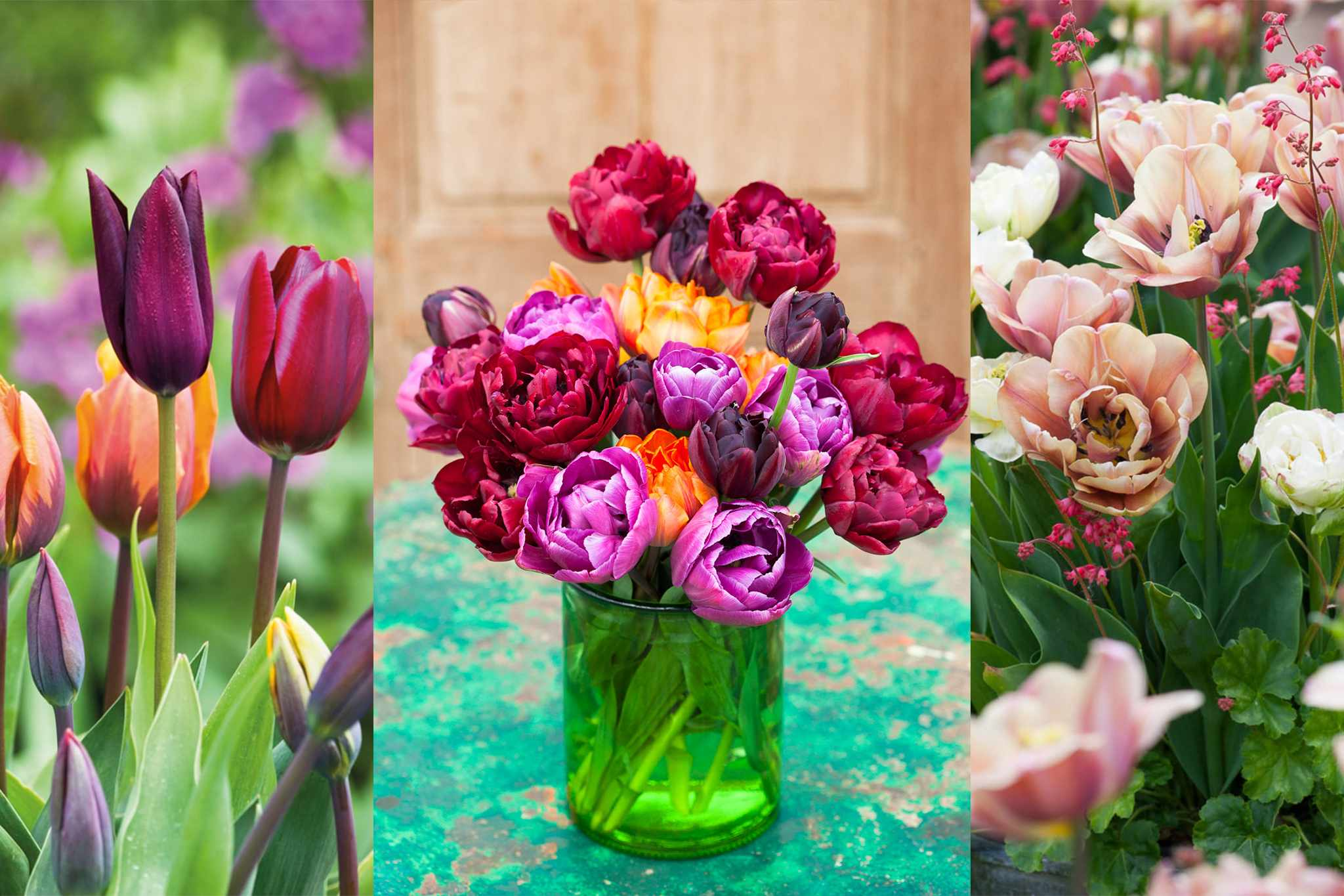 sarah-raven-free-pandp-tulips