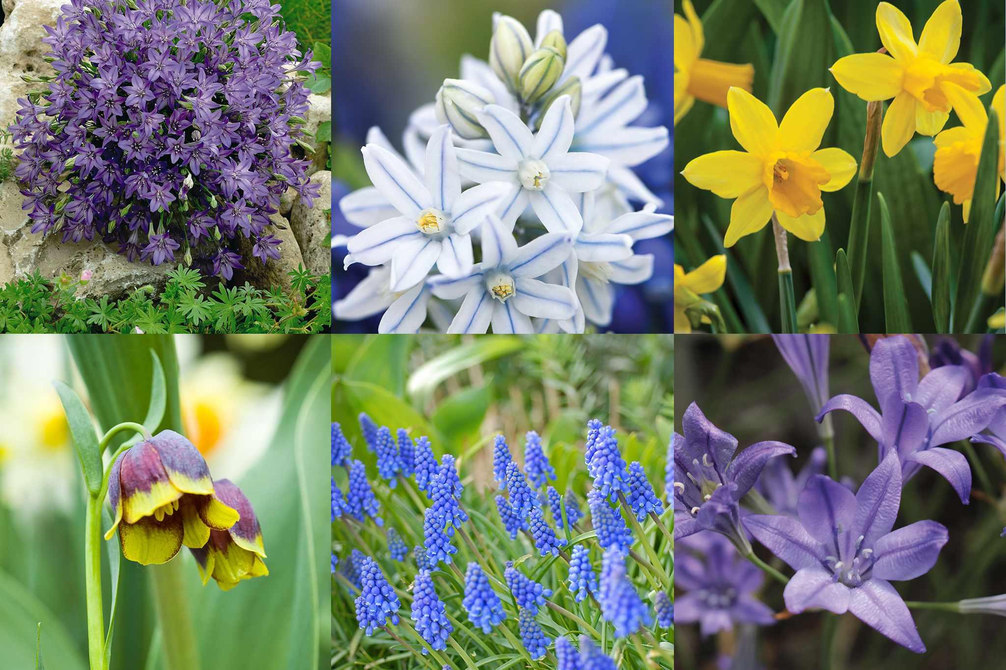 tandm-free-spring-summer-bulbs-2048-1365