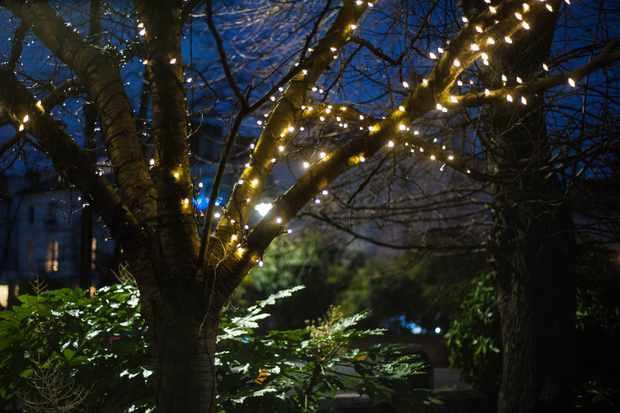 Christmas lights on trees
