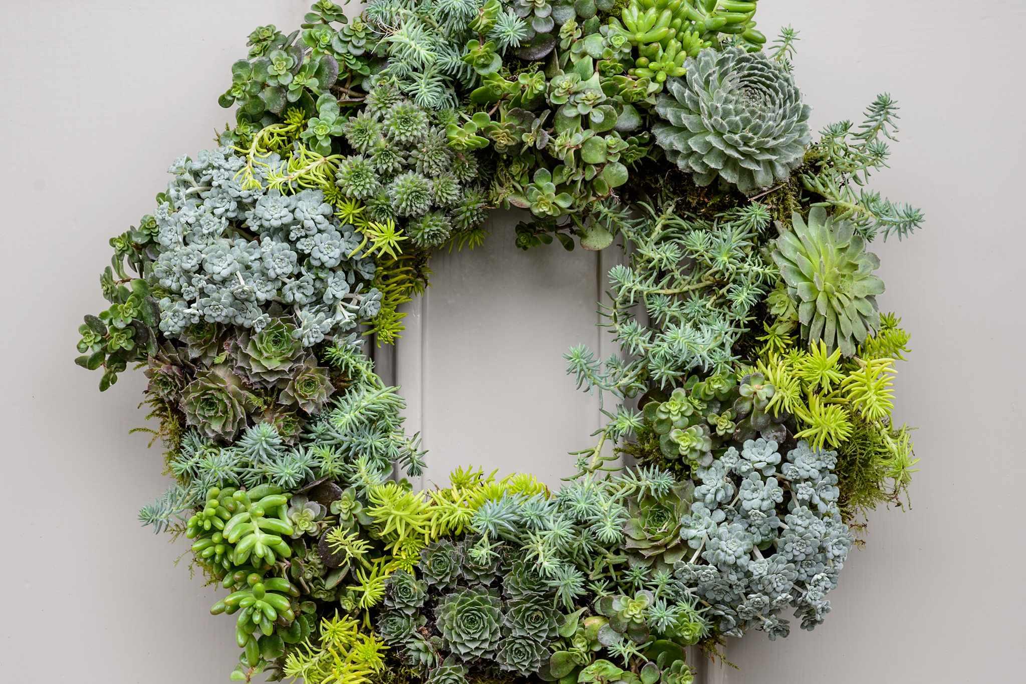 Living Christmas wreath