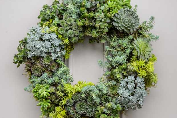Living Christmas wreath