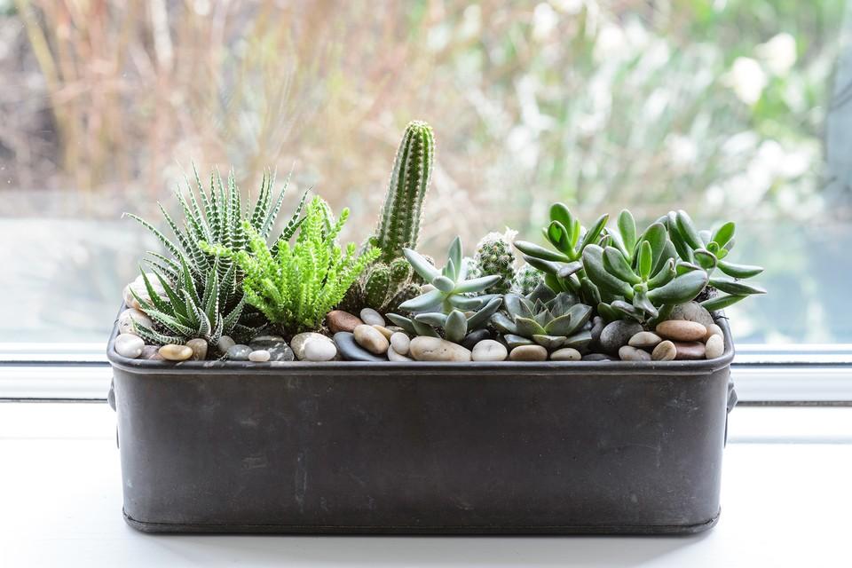 Eight Houseplants To Grow On A Windowsill Bbc Gardeners World