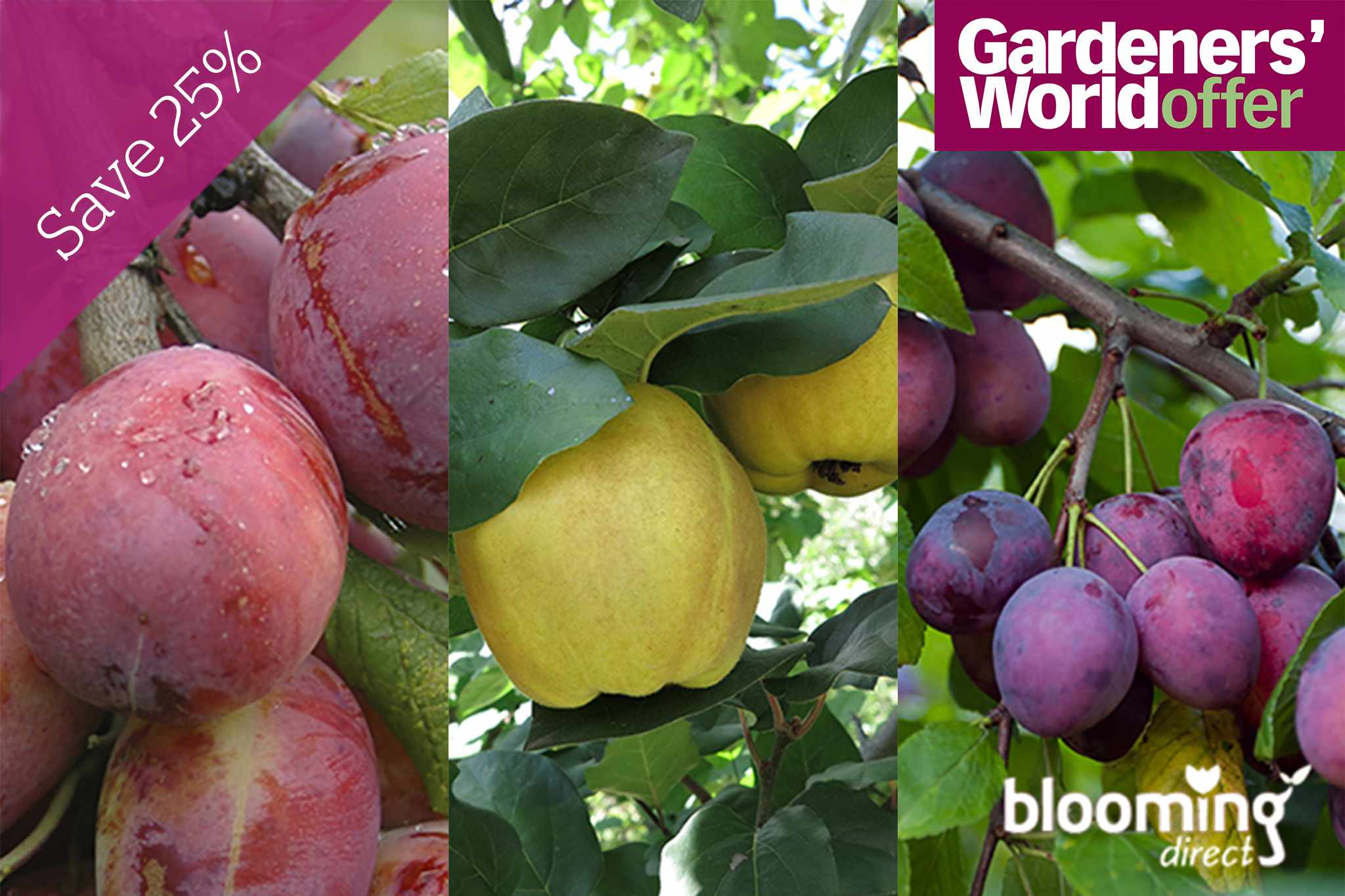 blooming-direct-promo-fruit-trees-2048-1365
