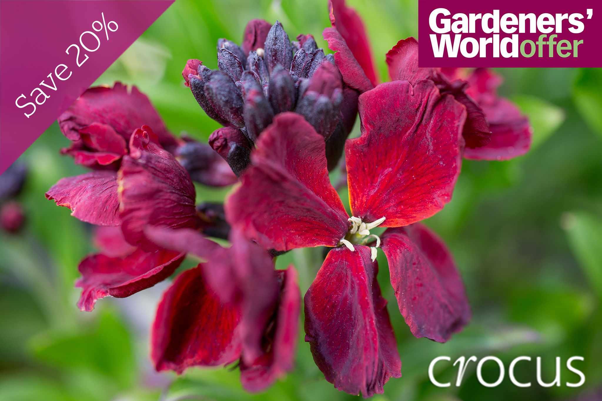 crocus-20-per-cent-promo-2048-1365