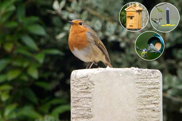 Save 10% across the Garden Bird range