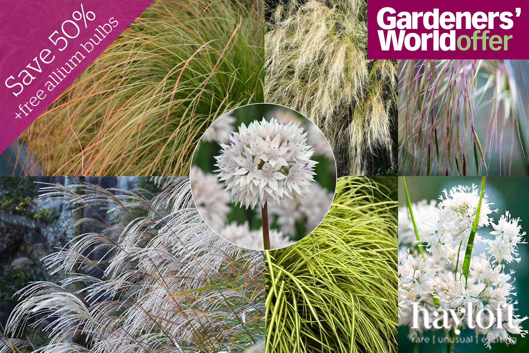 hayloft-grasses-promo-2048-1365