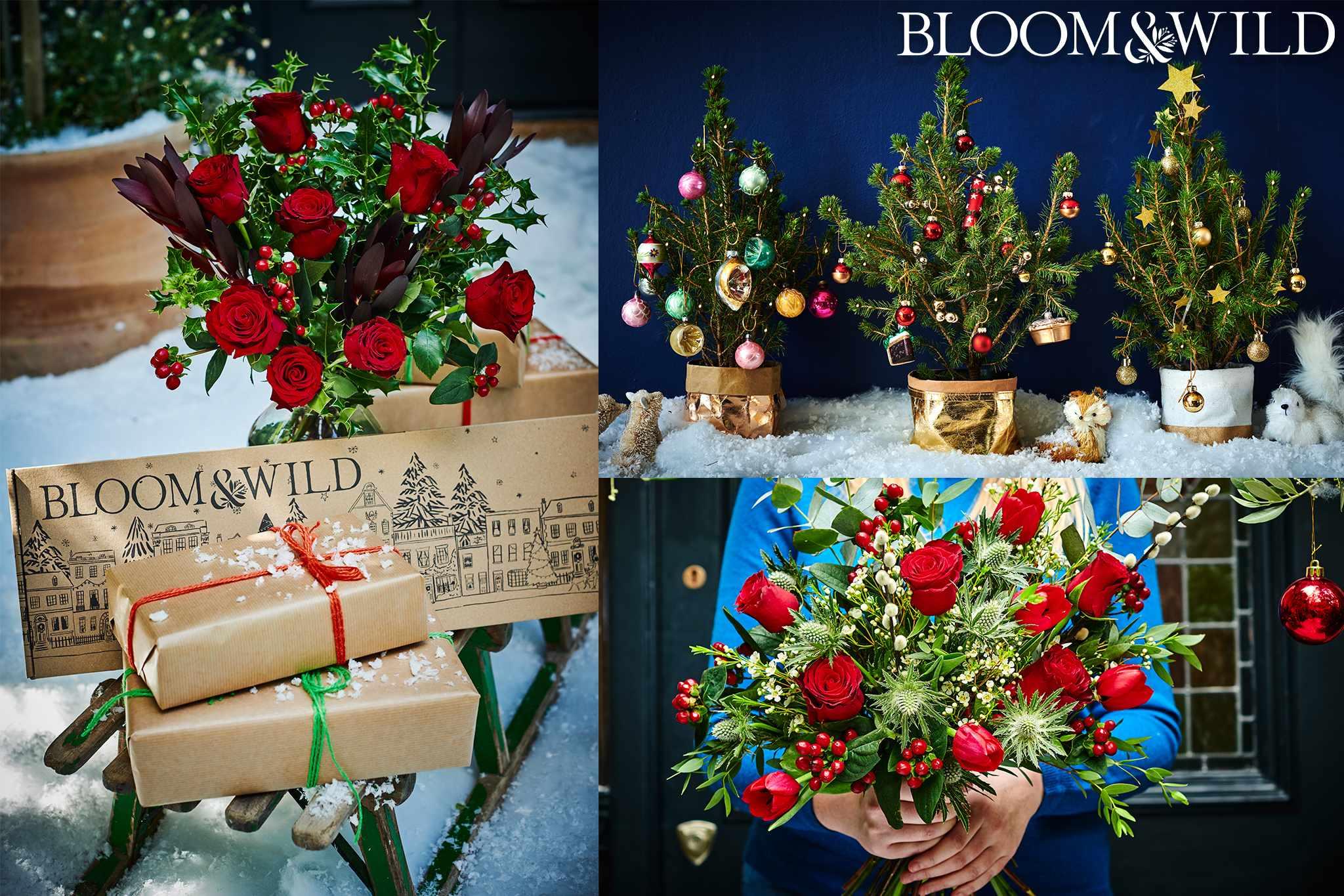 2018-nov-bloomandwild_1-2048-1365