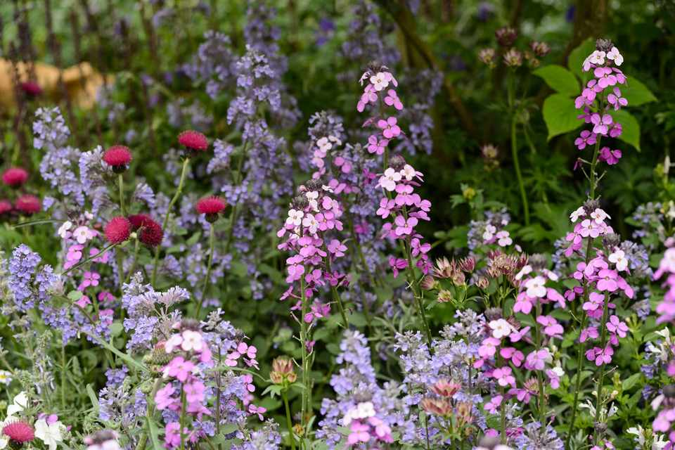 12 Key Plants For A Cottage Garden, How To Plan A Cottage Garden Uk