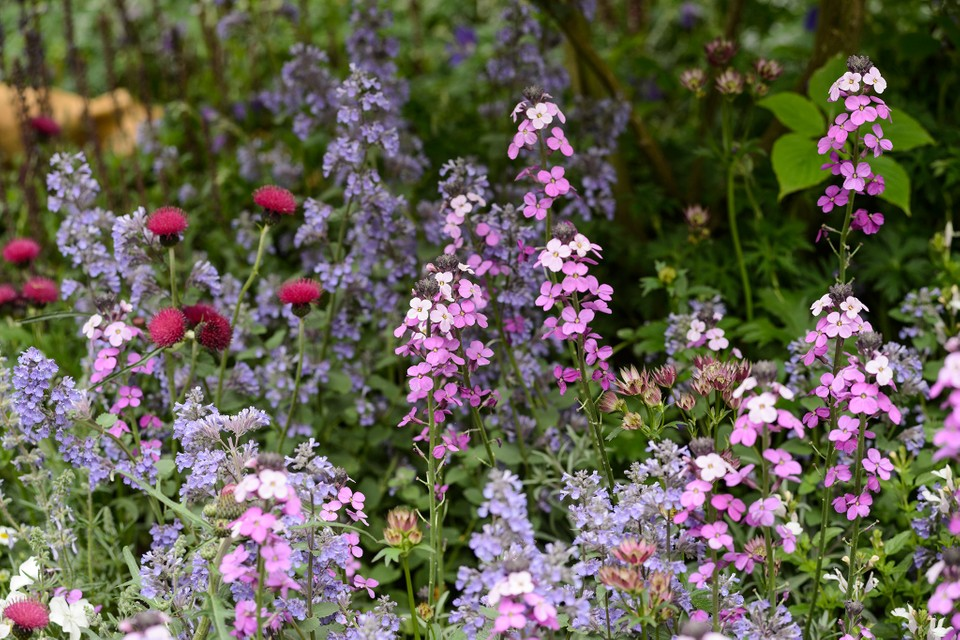 12 Key Plants For A Cottage Garden, How To Plan A Cottage Garden