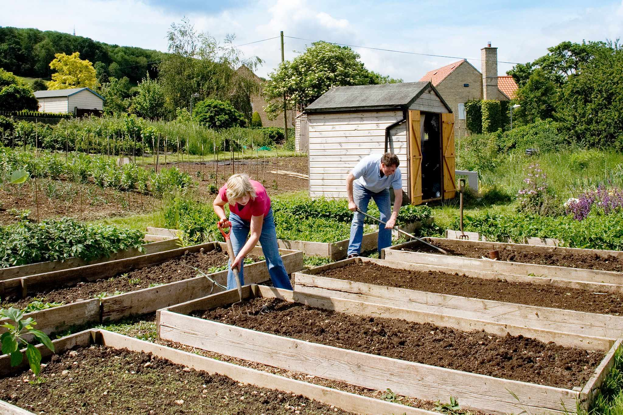 Preparing allotment beds
