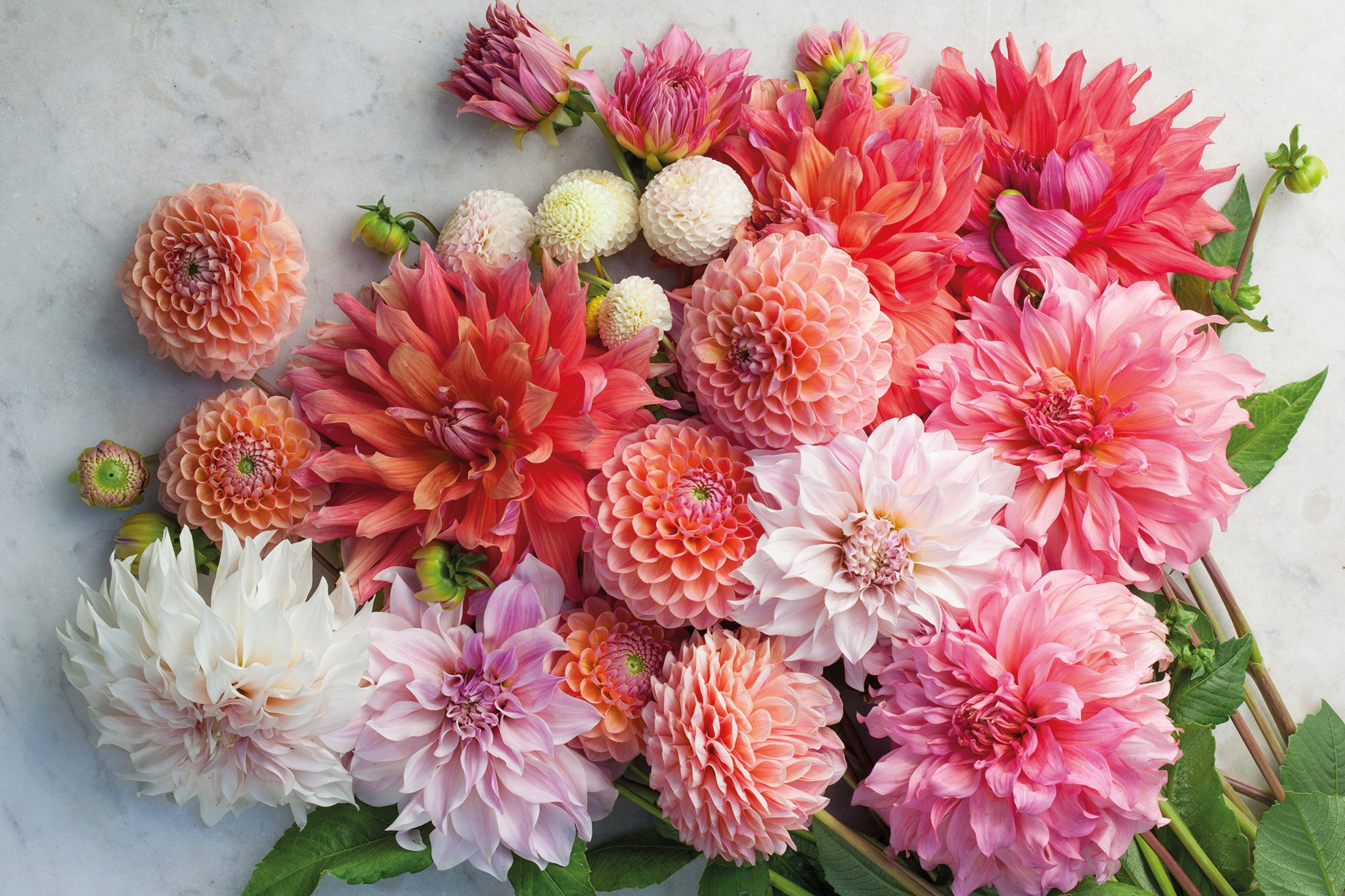 sarah-raven-dahlias-20-per-cent-off-2048-1365