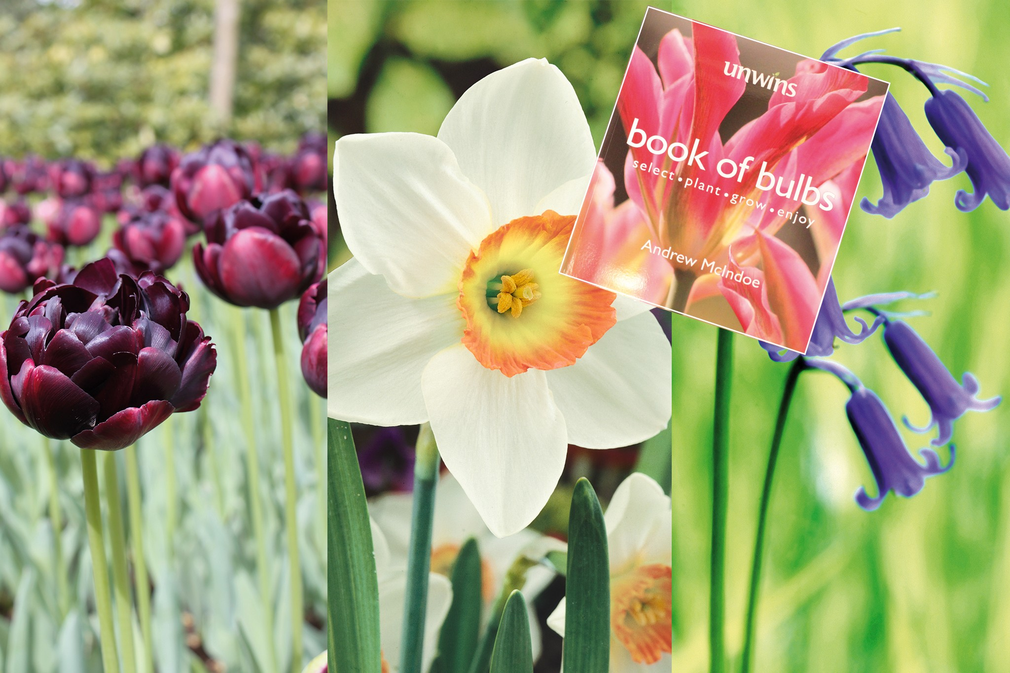 unwins-subs-free-book-with-spring-bulbs-2048-1365