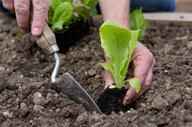 Beginner gardening tips - how to plant