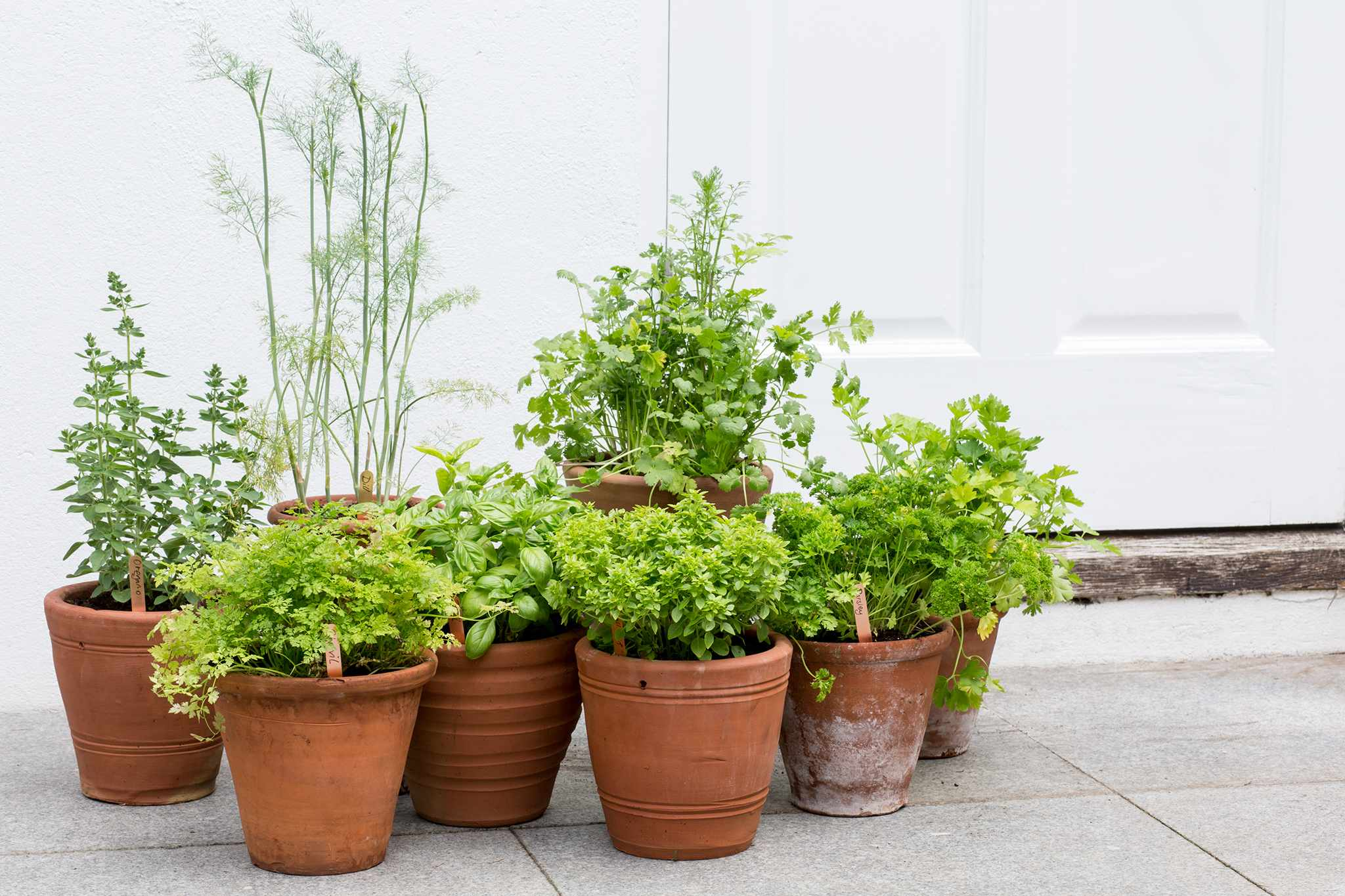 Group of potted herbs