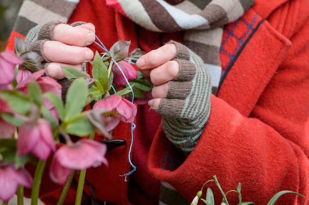 Tying coloured wool around the pollinated hellebore flower