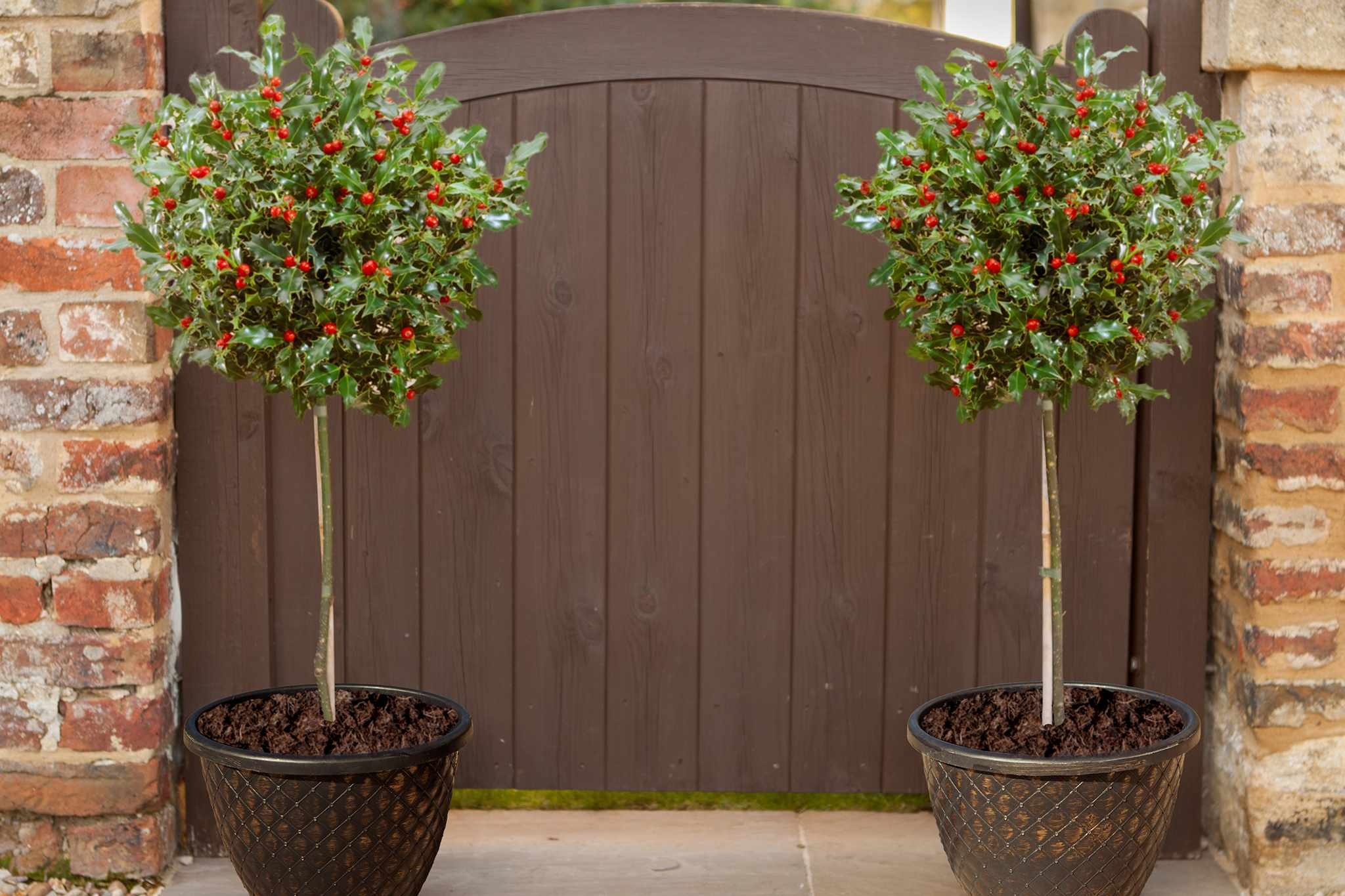 bloomingdirect-holly-standards-2048-1465