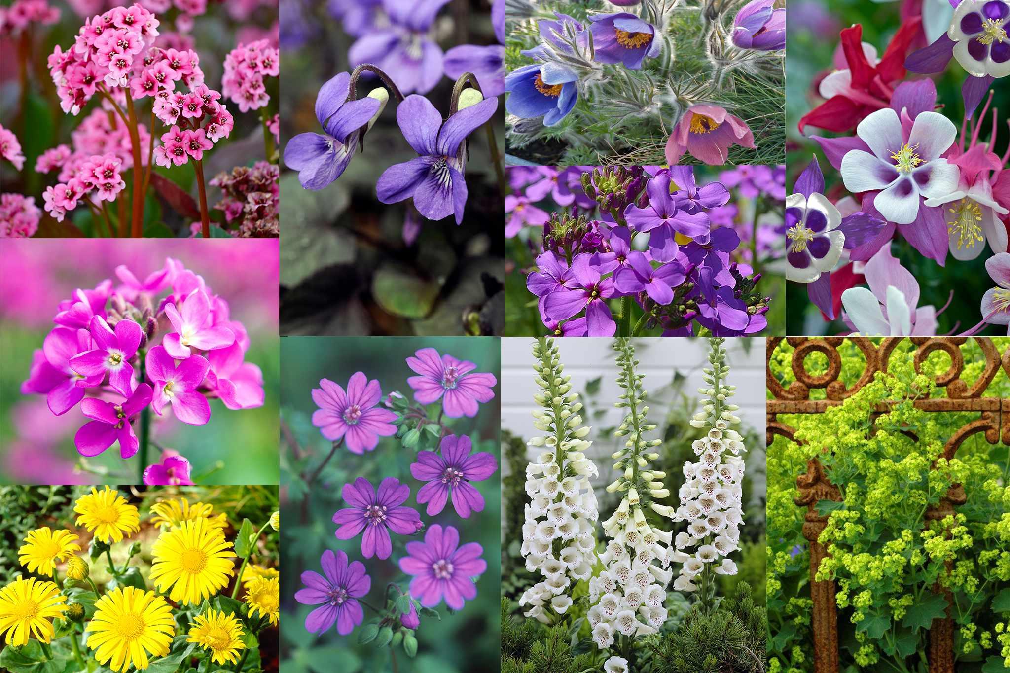 hayloft-spring-perennials-2048-1365