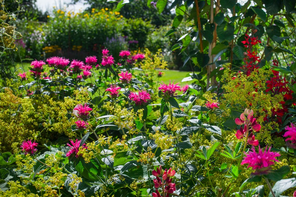 How To Plan For Year Round Colour Bbc Gardeners World Magazine