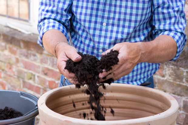 Gardener adding compost to pot