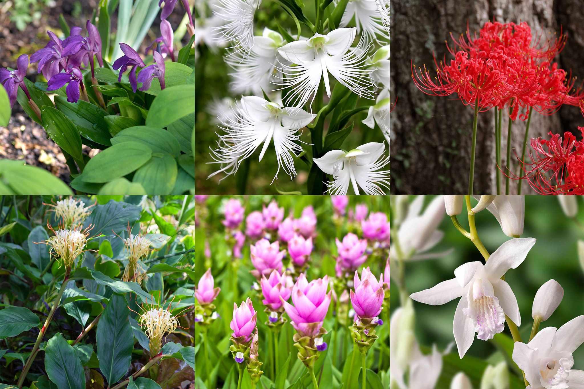farmer-gracy-japansese-plant-collection_V2-2048-1365