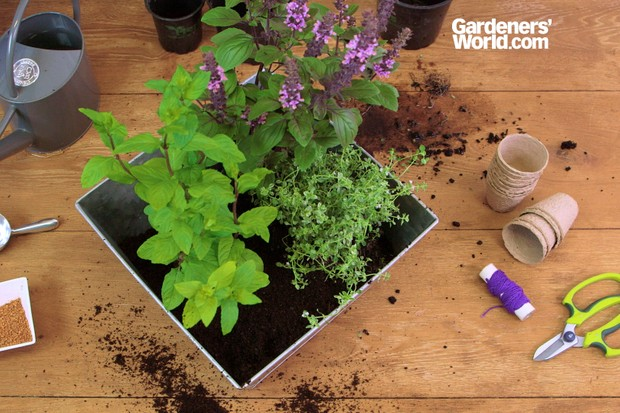 Herb container with African basil, thyme and mint
