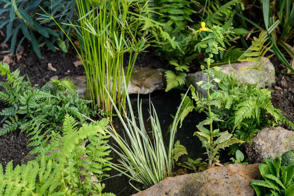 Finished mini pond for wildlife