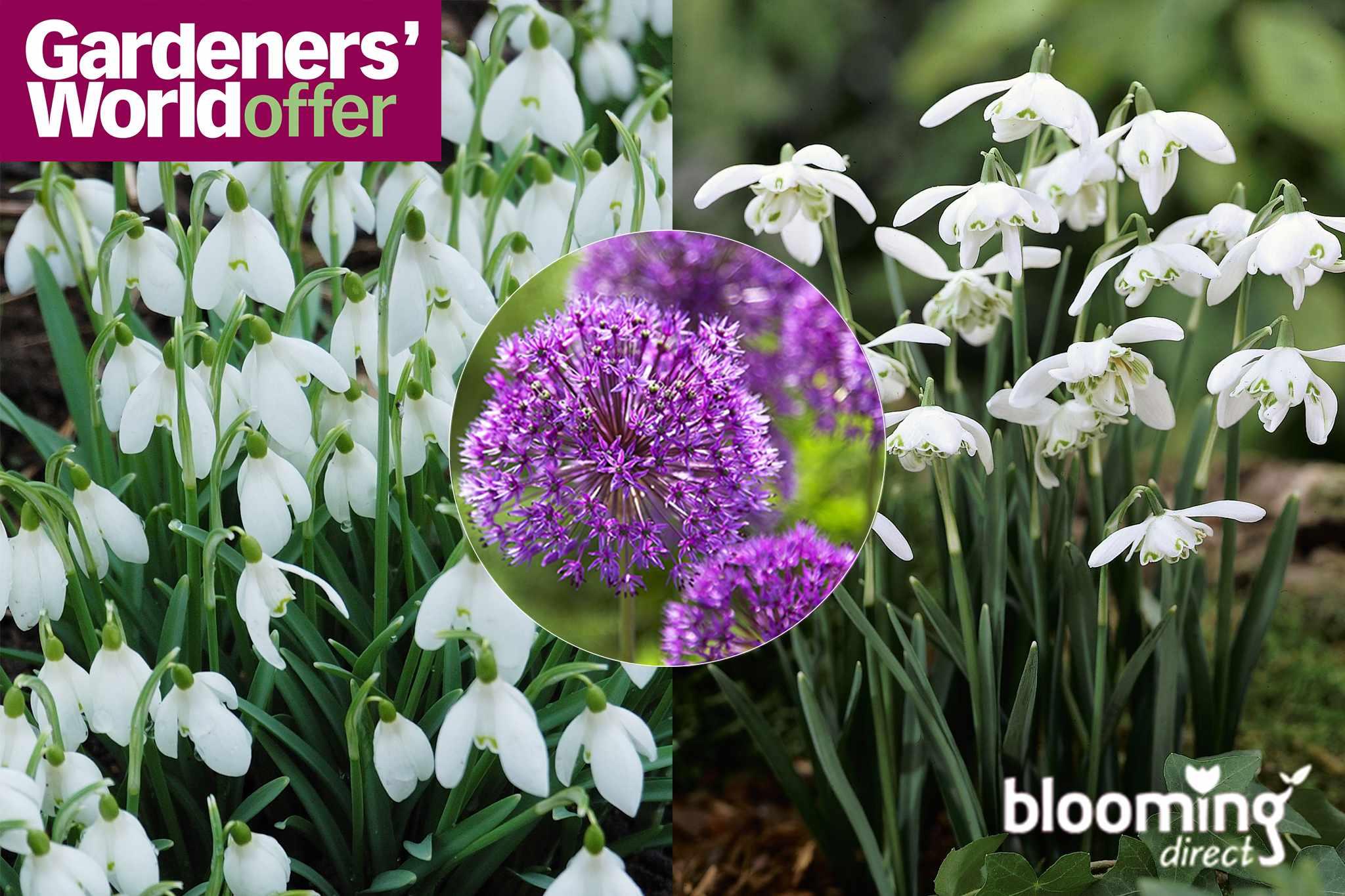 blooming-mpu-wtdn-direct-snowdrops_2-2048-1365