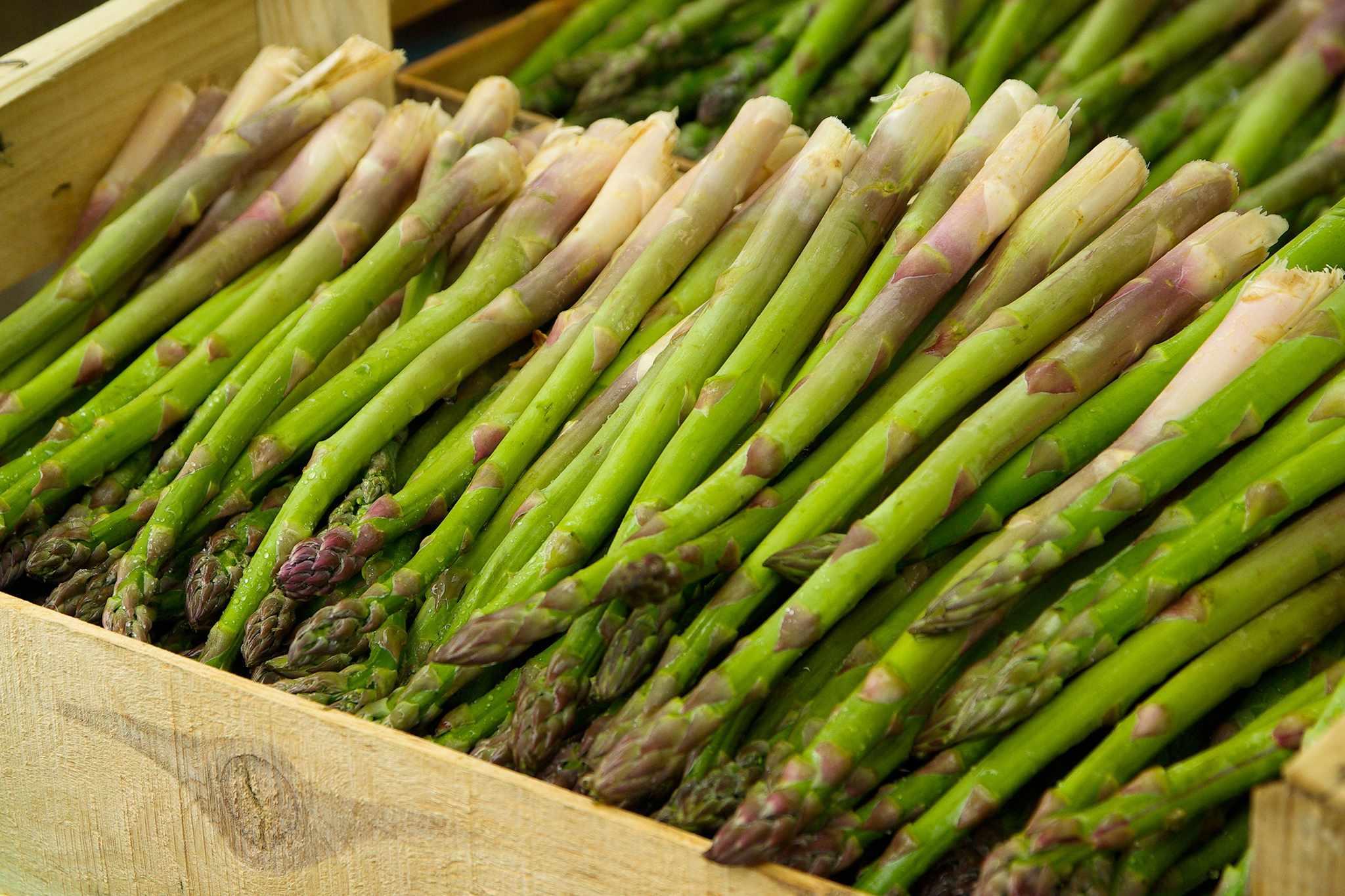 hayloft-asparagus-saver-collection-variety-millenium-2048-1365