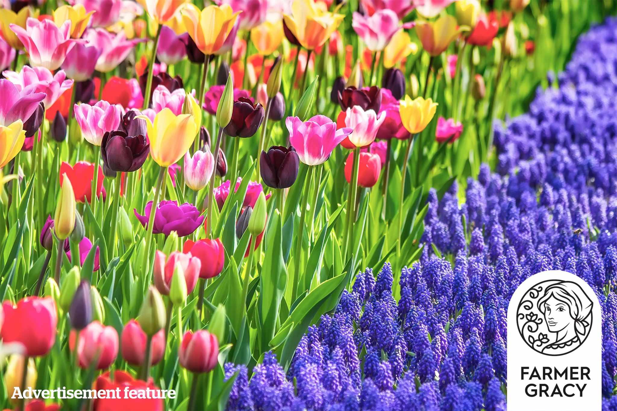 Win spring-flowering bulbs from Farmer Gracy - main image