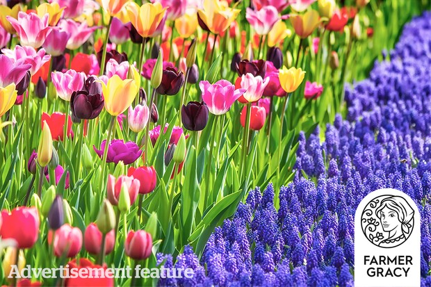 Win spring-flowering bulbs from Farmer Gracy