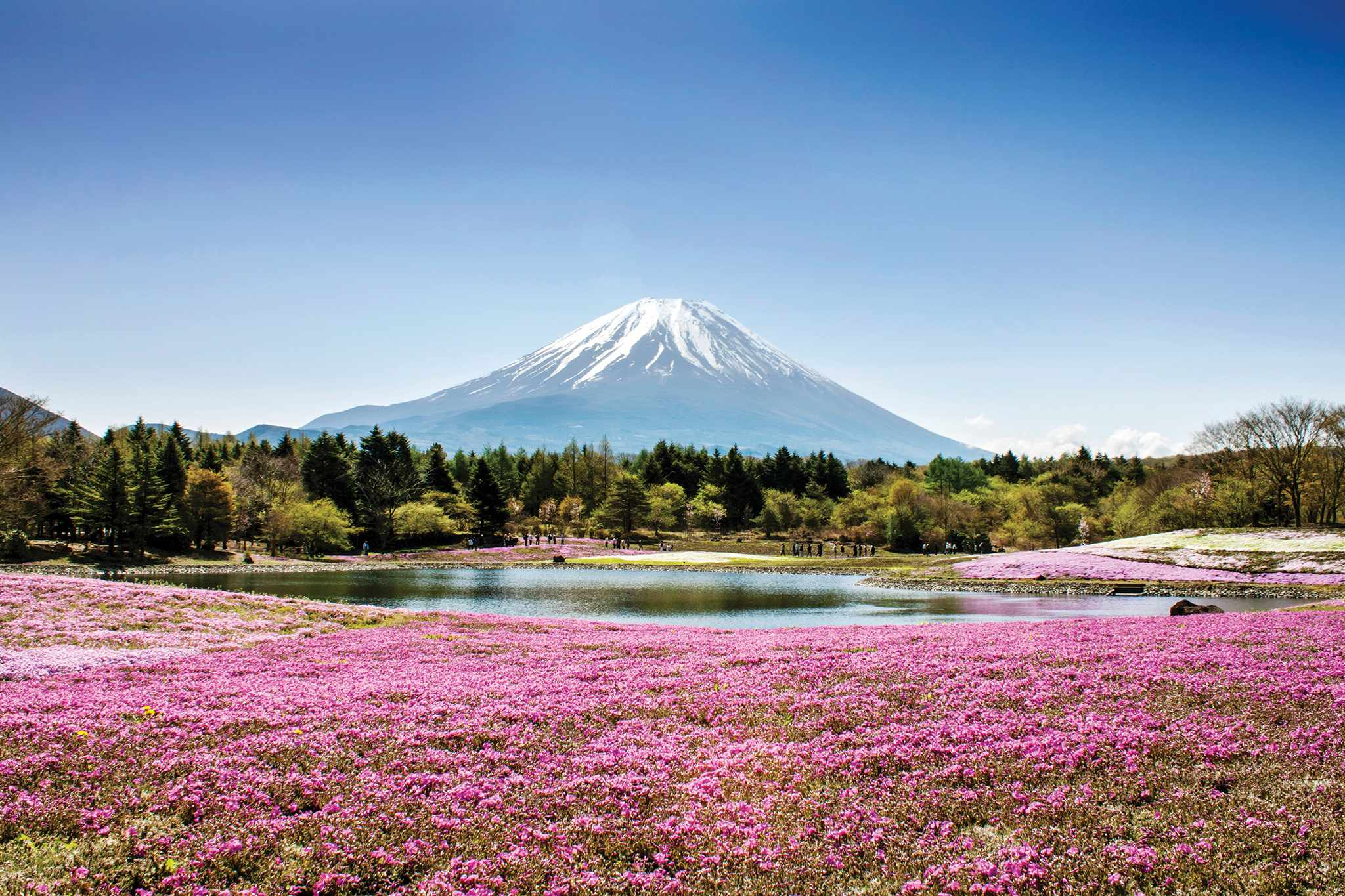 Japan Garden Discovery, flowers in front of Mt Fuji