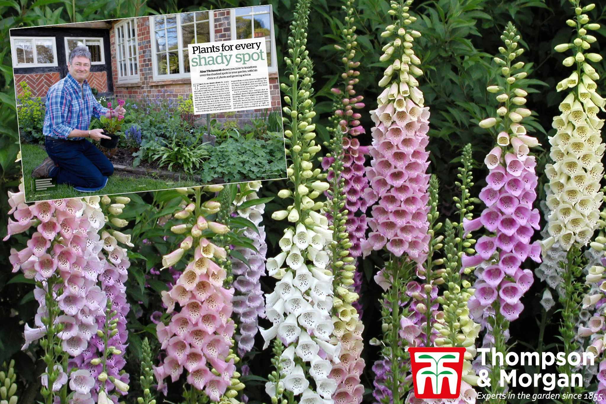 offers-page-hero-tandm-shade-loving-perennials-2048-1365