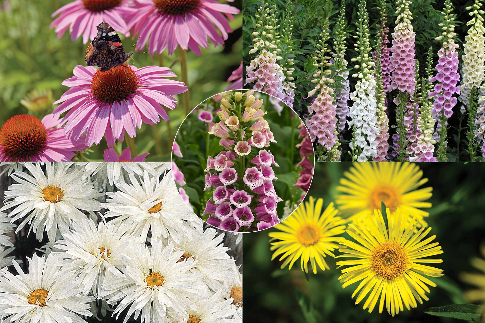 Shade loving perennials from Thompson & Morgan