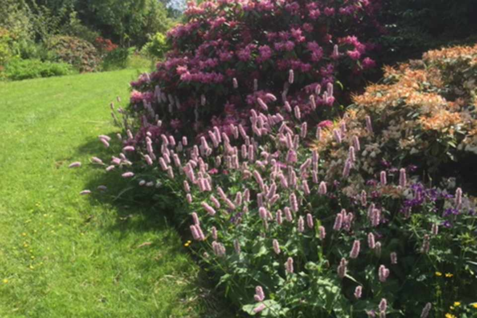 Norwood Gardens