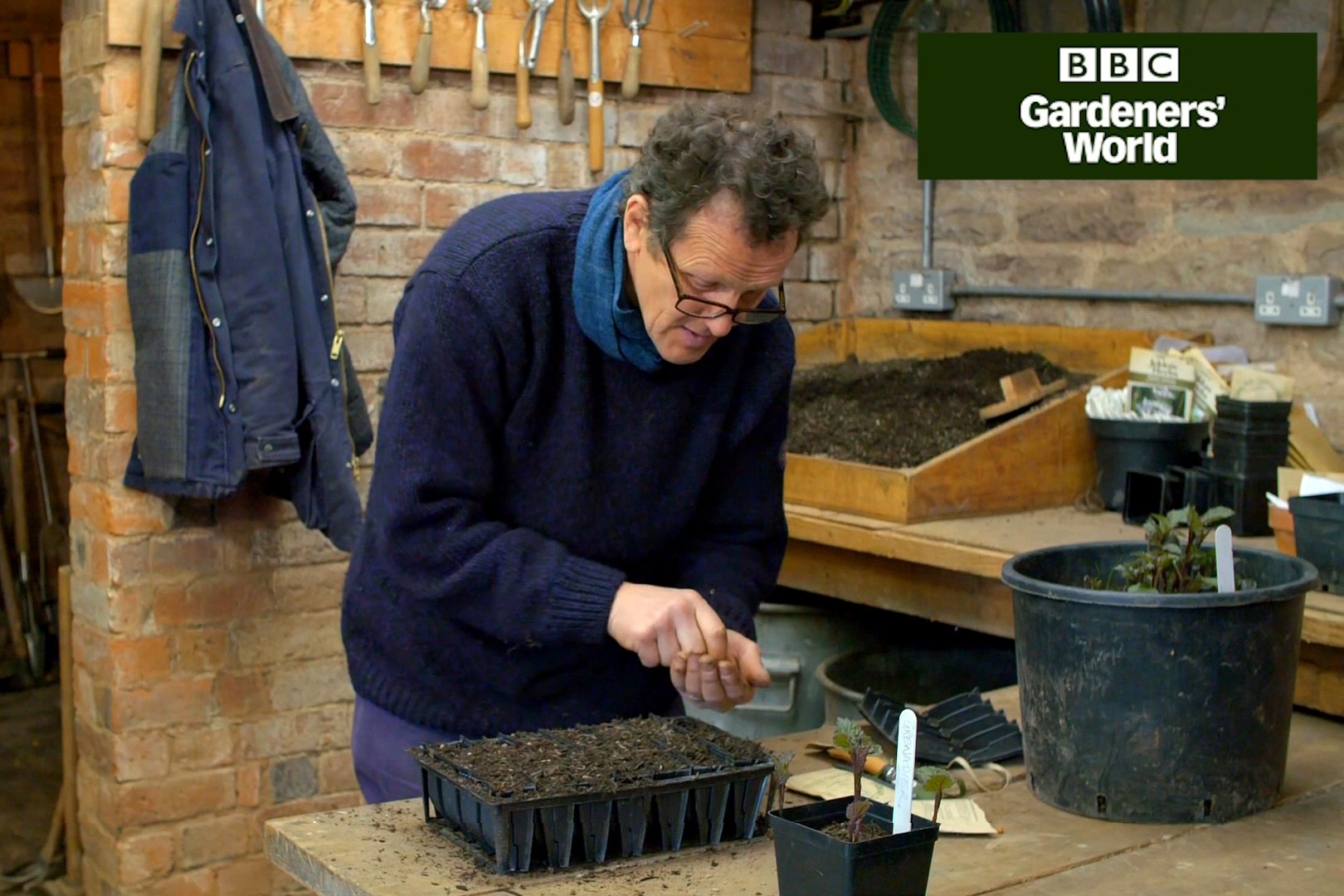 Monty Don sowing peas in a modular tray