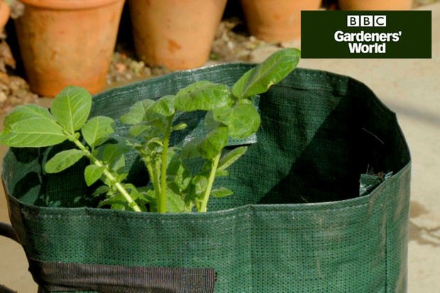 Monty Don earthing up potatoes in a bag
