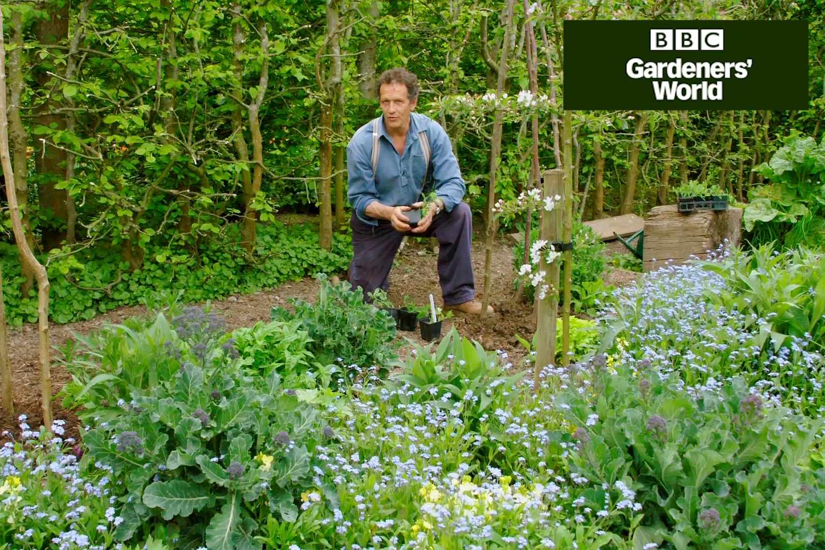 Monty Don planting out sweet peas