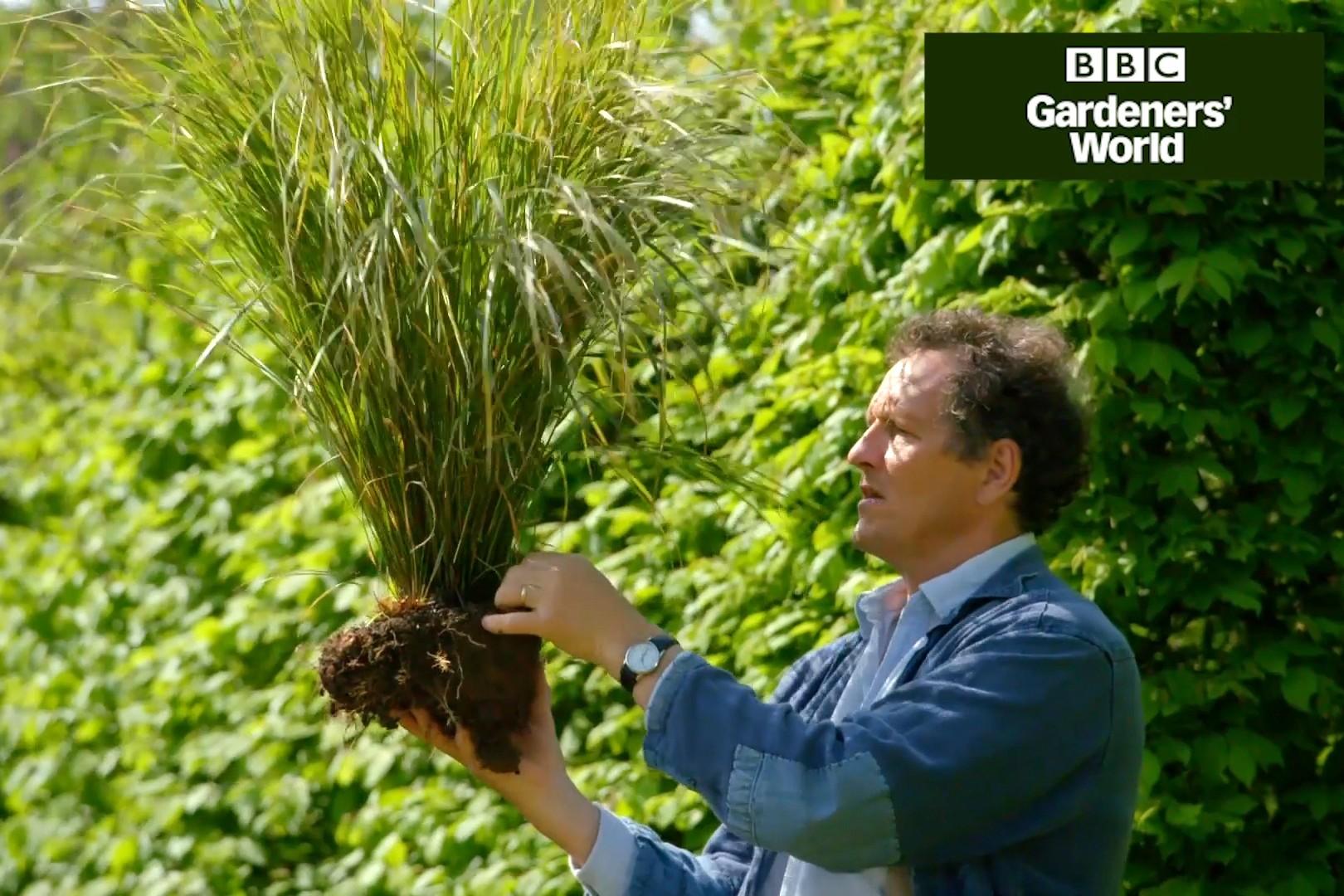 Monty Don transplanting pheasant grass
