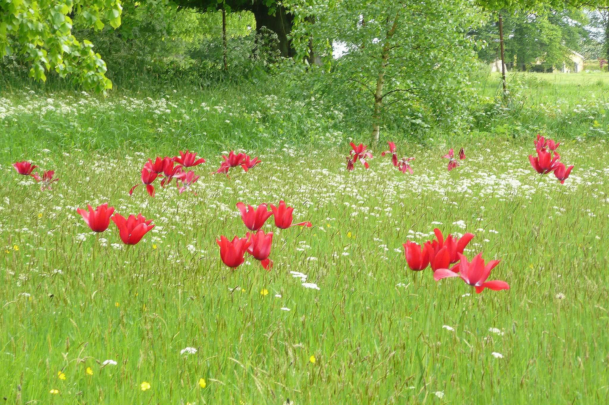 Bellefield Gardens