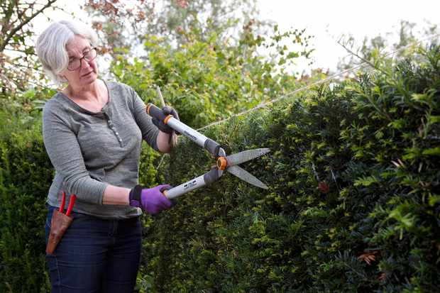 How to prune a yew hedge